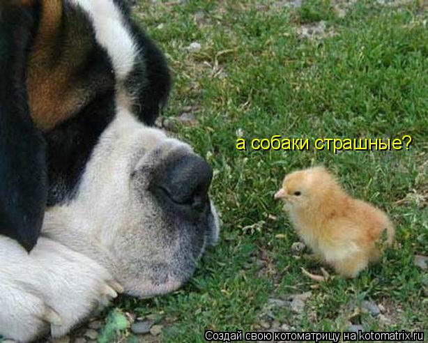 Котоматрица: а собаки страшные?