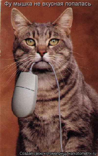 Котоматрица: Фу мышка не вкусная попалась