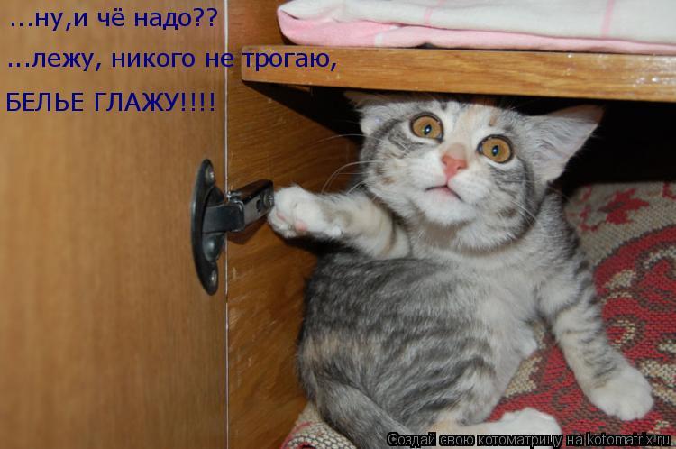 Котоматрица: ...ну,и чё надо?? ...лежу, никого не трогаю, БЕЛЬЕ ГЛАЖУ!!!!