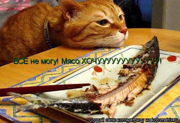 Котоматрица: ВСЕ не могу! Мясо ХОЧУУУУУУУУУУУУУ!