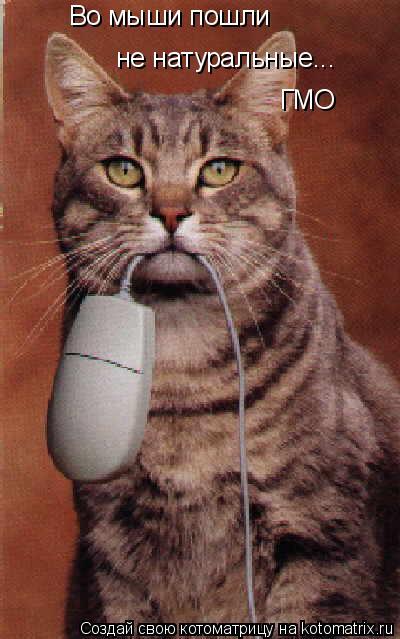 Котоматрица: Во мыши пошли не натуральные... ГМО наверно Во мыши пошли не натуральные... ГМО