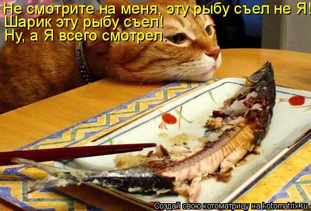 Котоматрица: Не смотрите на меня, эту рыбу съел не Я! Шарик эту рыбу съел! Ну, а Я всего смотрел.