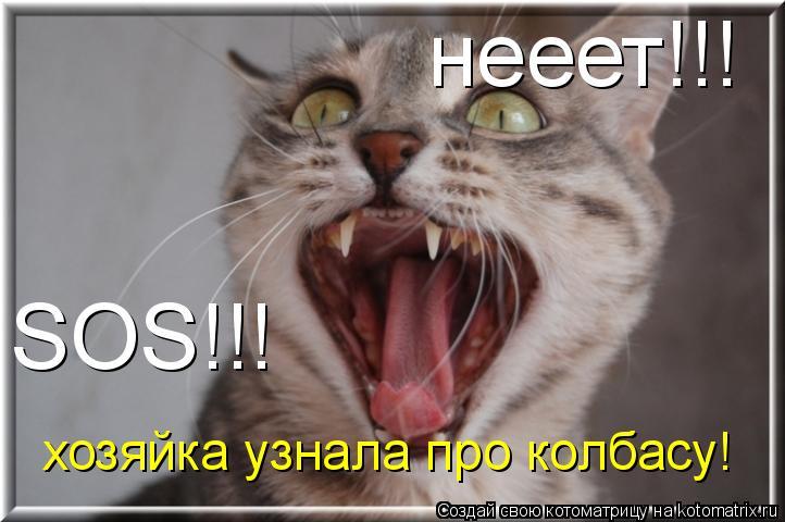 Котоматрица: нееет!!! SOS!!! хозяйка узнала про колбасу!