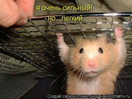 Котоматрица: я очень сильный! но...легкий.