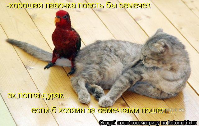 Котоматрица: -хорошая лавочка.поесть бы семечек эх,попка дурак... если б хозяин за семечками пошел.....
