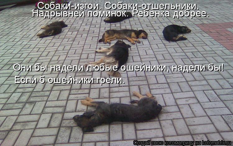 Котоматрица: Собаки-изгои. Собаки-отшельники.   Надрывней поминок. Ребенка добрее. Они бы надели любые ошейники, надели бы! Если б ошейники грели.