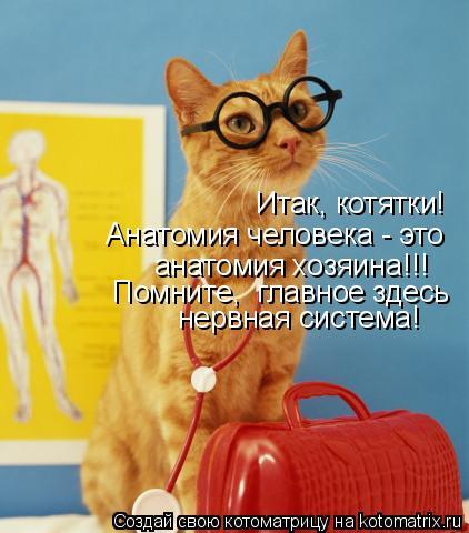 Котоматрица: Итак, котятки!  Анатомия человека - это  анатомия хозяина!!! Помните,  главное здесь нервная система!