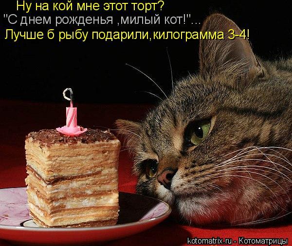 """Котоматрица: """"С днем рожденья ,милый кот!""""... Лучше б рыбу подарили,килограмма 3-4! Ну на кой мне этот торт?"""