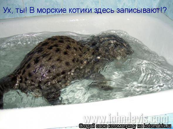 Котоматрица: Ух, ты! В морские котики здесь записывают!?