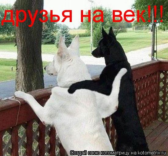 Котоматрица: друзья на век!!!
