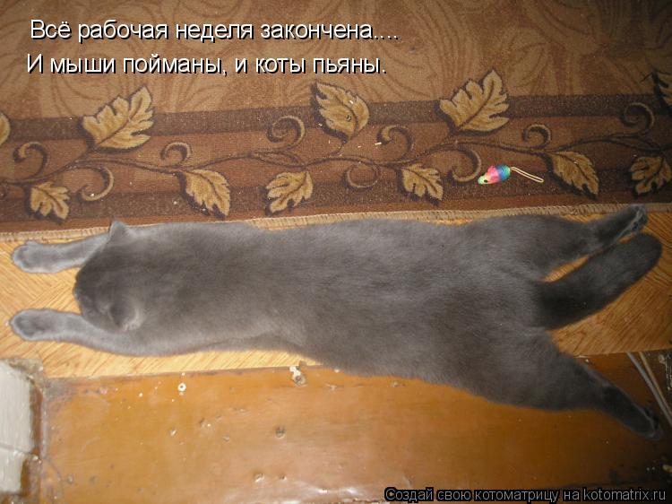 Котоматрица: Всё рабочая неделя закончена.... И мыши пойманы, и коты пьяны.