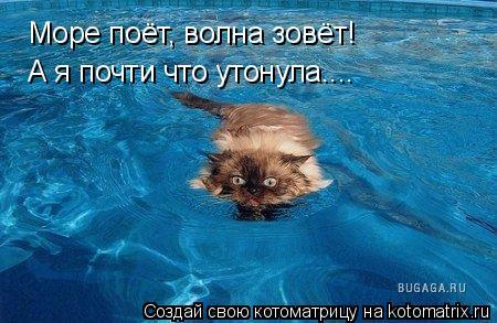 Котоматрица: Море поёт, волна зовёт! А я почти что утонула....