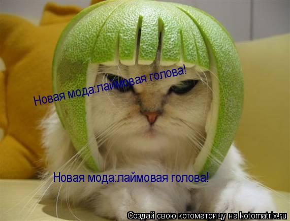 Котоматрица: Новая мода:лаймовая голова! Новая мода:лаймовая голова!