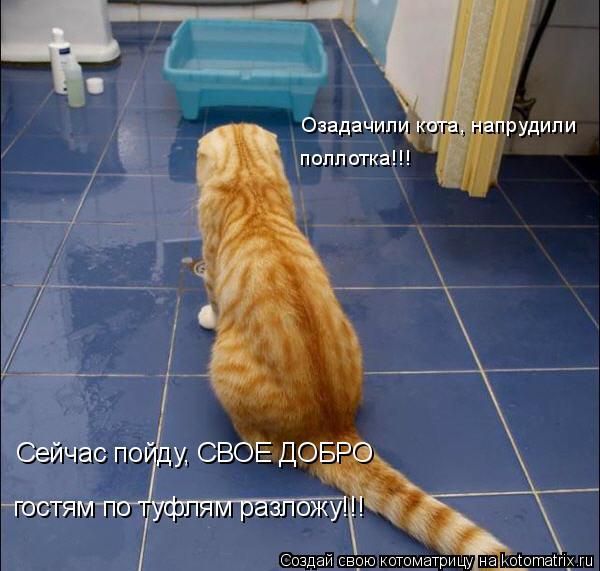 Котоматрица: Озадачили кота, напрудили поллотка!!! Сейчас пойду, СВОЕ ДОБРО гостям по туфлям разложу!!!