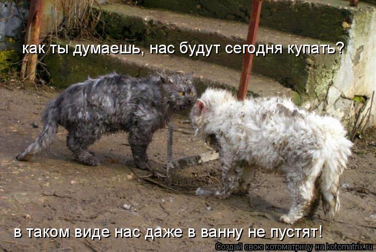 Котоматрица: как ты думаешь, нас будут сегодня купать? в таком виде нас даже в ванну не пустят!
