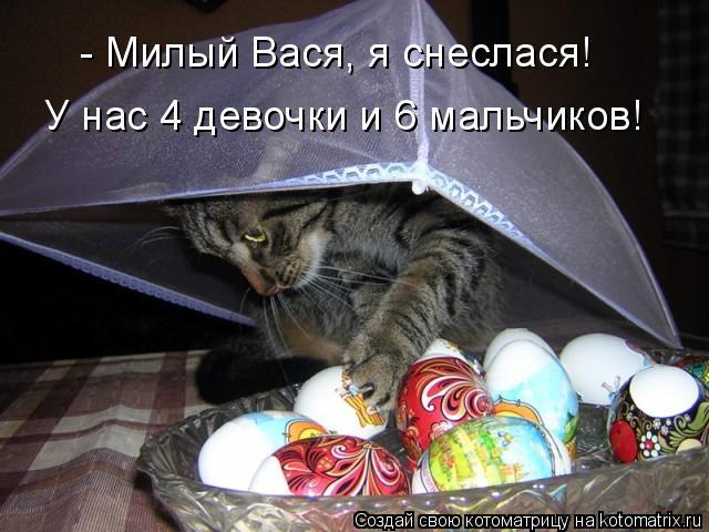 Котоматрица: - Милый Вася, я снеслася! У нас 4 девочки и 6 мальчиков!