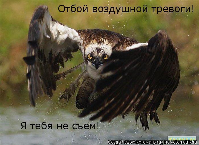 Котоматрица: Я тебя не съем! Отбой воздушной тревоги!