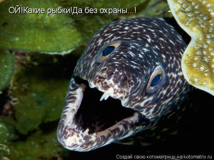 Котоматрица: ОЙ!Какие рыбки!Да без охраны...!