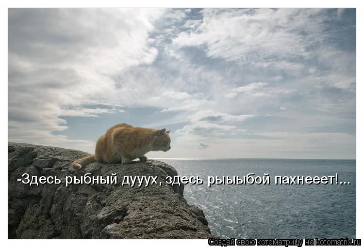 Котоматрица: -Здесь рыбный дууух, здесь рыыыбой пахнееет!...