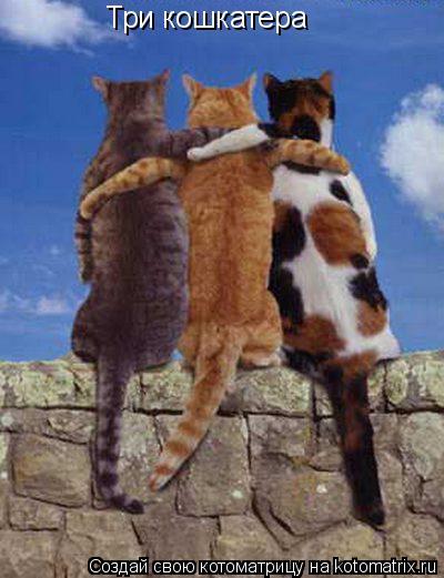 Котоматрица: Три кошкатера