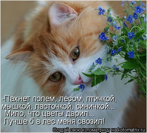 Котоматрица: -Пахнет полем, лесом, птичкой, мышкой, ласточкой, синичкой... Мило, что цветы дарил... Лучше б в лес меня свозил!