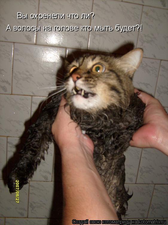 Котоматрица: Вы охренели что ли?  А волосы на голове кто мыть будет?!