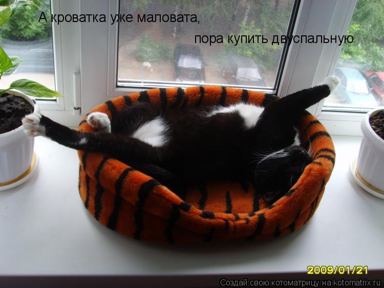 Котоматрица: А кроватка уже маловата, пора купить двуспальную