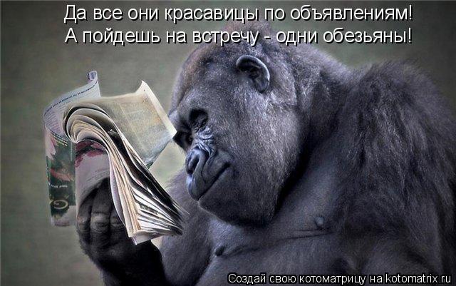 Котоматрица: Да все они красавицы по объявлениям! А пойдешь на встречу - одни обезьяны!