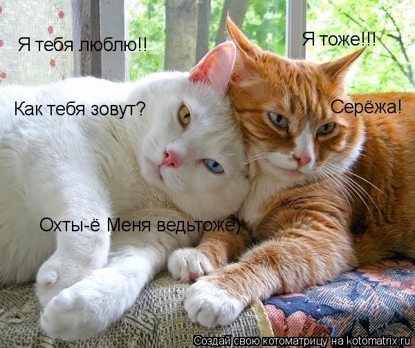 Котоматрица: Я тебя люблю!! Я тоже!!! Как тебя зовут? Серёжа! Охты-ё Меня ведьтоже)