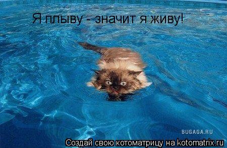 Котоматрица: Я плыву - значит я живу!