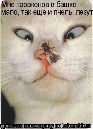 Котоматрица: Мне тараконов в башке мало, так еще и пчелы лезут!