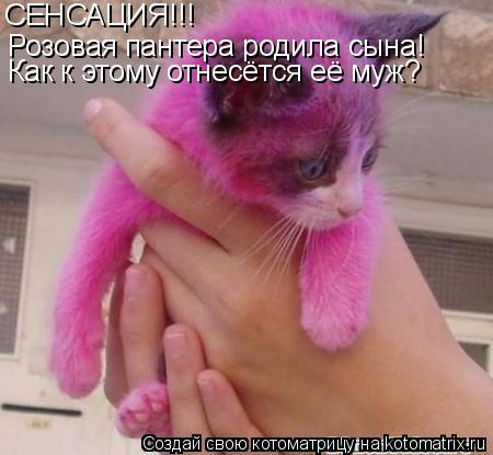 Котоматрица: СЕНСАЦИЯ!!! Розовая пантера родила сына! Как к этому отнесётся её муж?