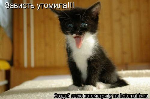 Котоматрица: Зависть утомила!!!