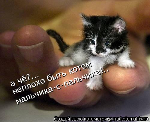 Котоматрица: а чё?...  неплохо быть котом мальчика-с-пальчика!..