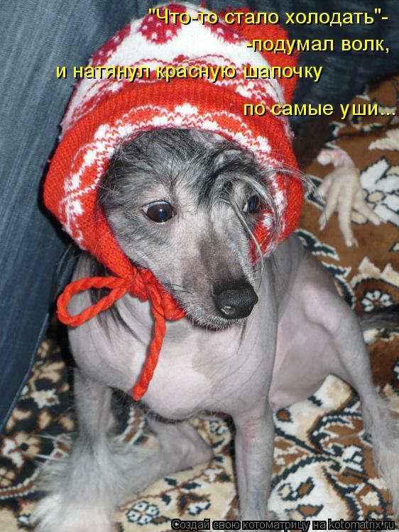 """Котоматрица: """"Что-то стало холодать""""- -подумал волк, и натянул красную шапочку  по самые уши..."""