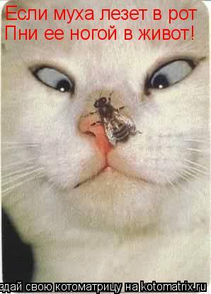 Котоматрица: Если муха лезет в рот Пни ее ногой в живот!