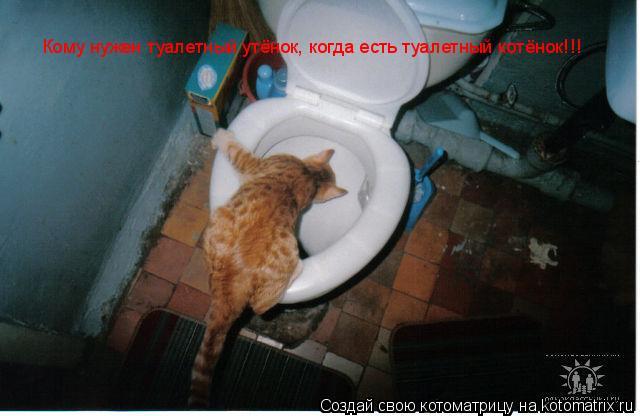 Котоматрица: Кому нужен туалетный утёнок, когда есть туалетный котёнок!!!