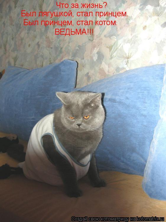 Котоматрица: Что за жизнь? Был лягушкой, стал принцем. Был принцем, стал котом. ВЕДЬМА!!!