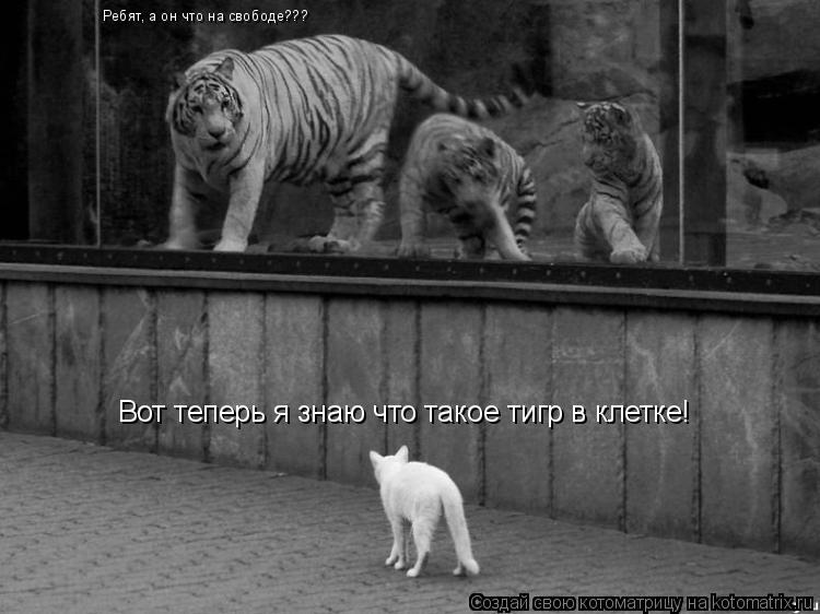 Котоматрица: Вот теперь я знаю что такое тигр в клетке! Ребят, а он что на свободе???