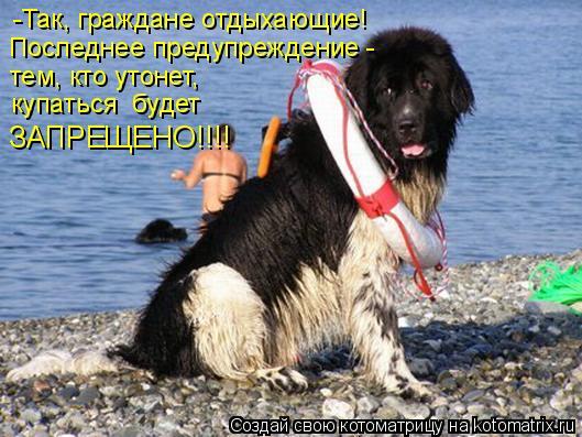 Котоматрица: -Так, граждане отдыхающие!  Последнее предупреждение - тем, кто утонет,  купаться  будет  ЗАПРЕЩЕНО!!!!