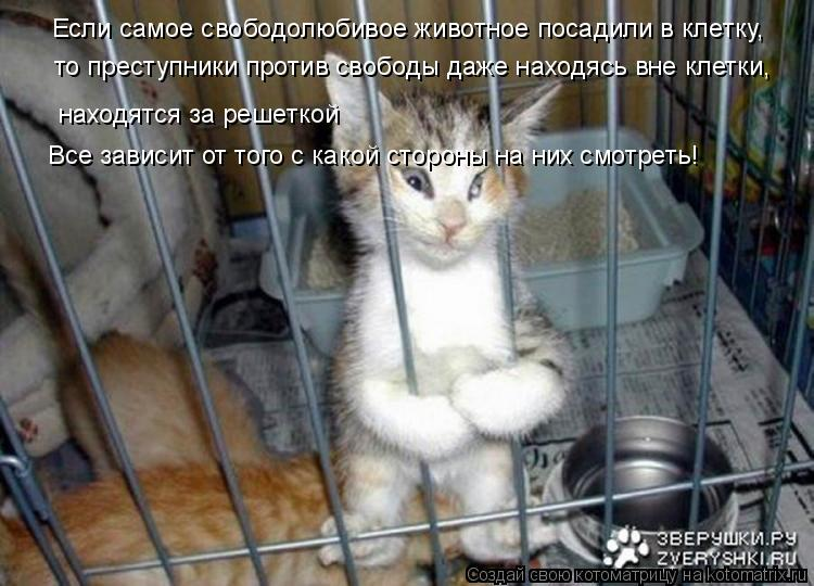 Котоматрица: Если самое свободолюбивое животное посадили в клетку, то преступники против свободы даже находясь вне клетки, находятся за решеткой Все за