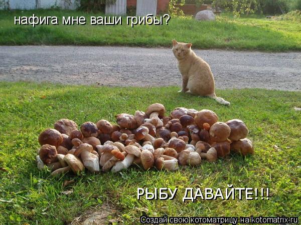 Котоматрица: нафига мне ваши грибы? РЫБУ ДАВАЙТЕ!!!