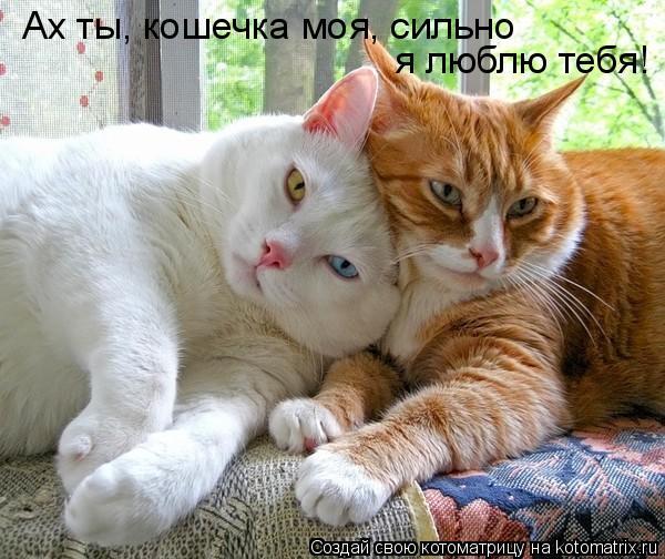 Котоматрица: Ах ты, кошечка моя, сильно  я люблю тебя!