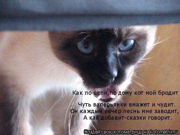 Котоматрица: Как по цепи,по дому кот мой бродит  Чуть валерьянки вмажет и чудит. Он каждый вечер песнь мне заводит, А как добавит-сказки говорит.