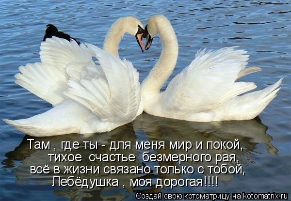 Котоматрица: Там , где ты - для меня мир и покой,  тихое  счастье  безмерного рая, всё в жизни связано только с тобой, Лебёдушка , моя дорогая!!!!