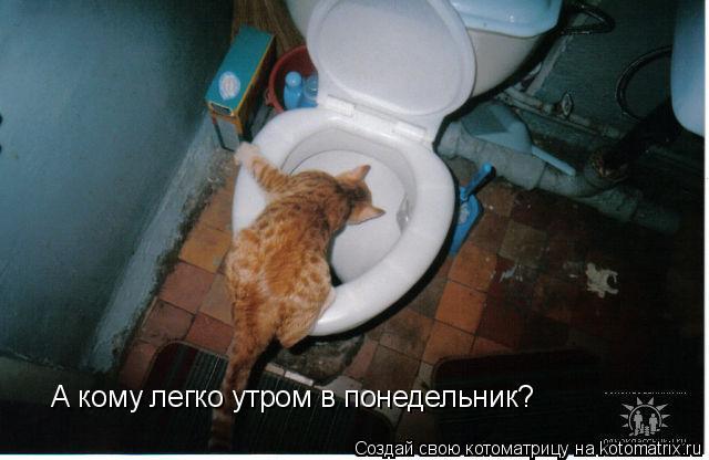 Котоматрица: А кому легко утром в понедельник?