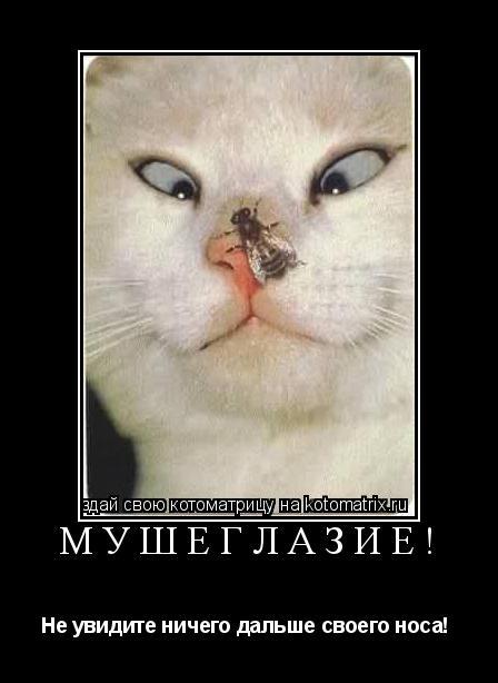 Котоматрица: МУШЕГЛАЗИЕ! Не увидите ничего дальше своего носа!