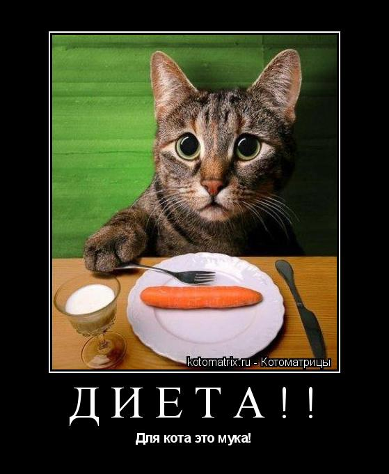 Котоматрица: Диета!! Для кота это мука!