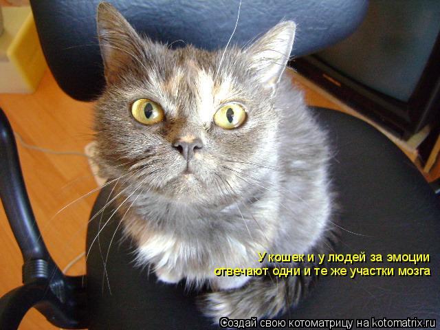Котоматрица: У кошек и у людей за эмоции отвечают одни и те же участки мозга