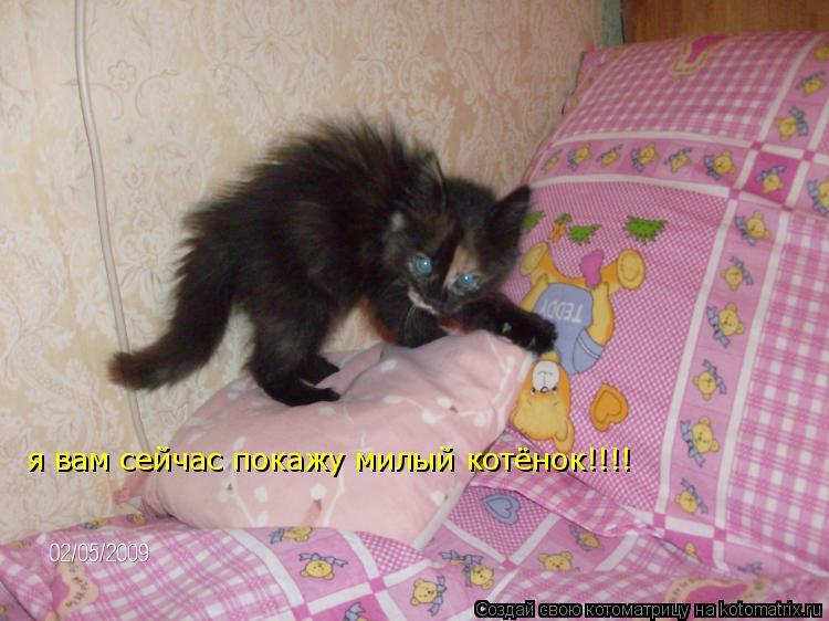 Котоматрица: я вам сейчас покажу милый котёнок!!!!